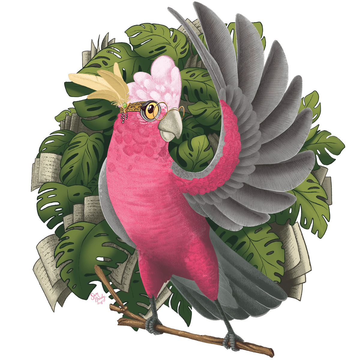 Gallah Illustration